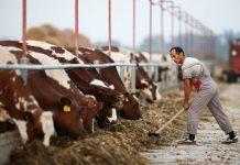 obavezna-obnova-registracije-poljoprivrednog-gazdinstva