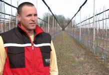 BOŠKO FILIPOVIĆ, proizvođač jabuka: PROIZVODNJA JABUKA SE ISPLATI!
