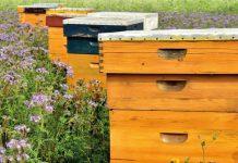 PODSTICAJI U PČELARSKOJ PROIZVODNJI: Kako do subvencija po košnici?